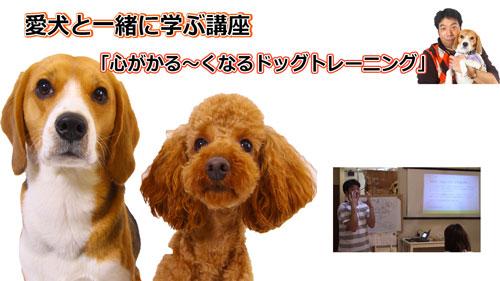 愛犬と飼い主を繋ぐ、犬と人のこころの講座