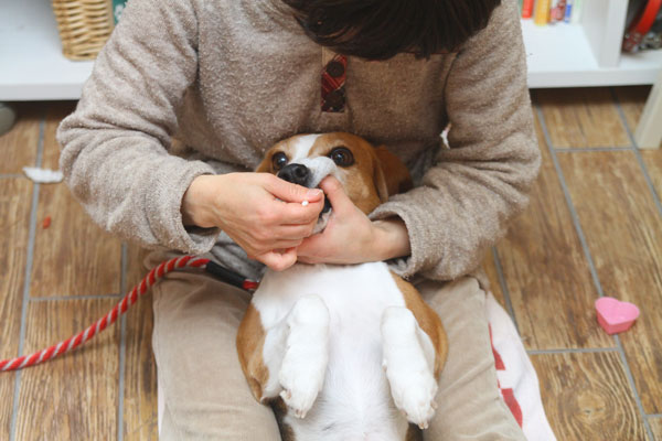 愛犬と一緒に学べるセミナー